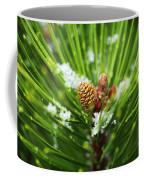 Pine Cone Cloeup Coffee Mug