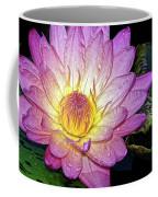 Pink And Yellow Waterlily Coffee Mug