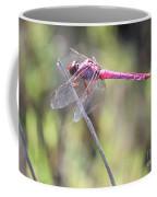Pink Dragonfly In The Marsh Coffee Mug