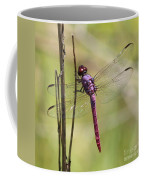 Pink Dragonfly With Sparkly Wings Coffee Mug
