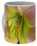 Pink Lily Up Close Coffee Mug
