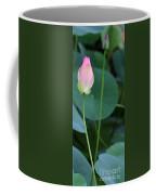 Pink Lotus Buds Coffee Mug