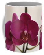 Pink Phalaenopsis Orchid  Coffee Mug