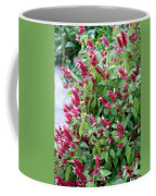 Pink Shrimp Plant Coffee Mug