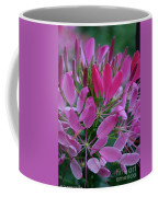 Pink Spider Flower Coffee Mug