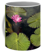 Pink Water Lily I Coffee Mug