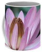 Pink Water Lily Macro Coffee Mug