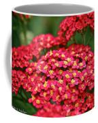 Pink Yarrow Coffee Mug