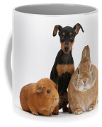 Pinscher Puppy With Rabbit And Guinea Coffee Mug