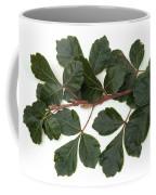 Poison Oak Branch Coffee Mug
