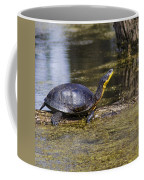 Pond Turtle Basking In The Sun Coffee Mug