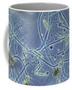 Pond Water Sample, Lm Coffee Mug