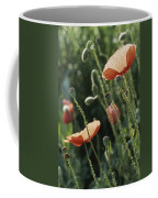 Poppies In A Field In Provence Coffee Mug