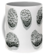 Poppy Seeds Engraving-1665 Coffee Mug