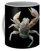 Porcelain Crab Coffee Mug