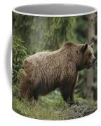 Portrait Of A Brown Bear Coffee Mug