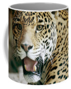 Portrait Of A Captive Jaguar Panthera Coffee Mug