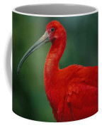 Portrait Of A Captive Scarlet Ibis Coffee Mug