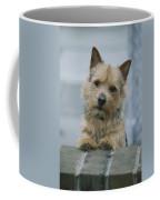 Portrait Of A Norwich Terrier Coffee Mug