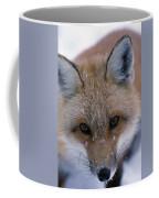 Portrait Of Adult Red Fox Coffee Mug