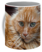 Portrait Of An Orange Kitty Coffee Mug