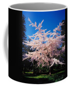 Powerscourt Gardens, Powerscourt Coffee Mug