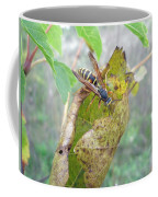 Predatory Wasp Hunts Spider Coffee Mug