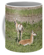 Pronghorn Antelope With Young Coffee Mug
