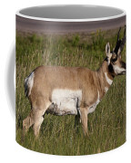 Pronghorn Male Custer State Park Black Hills South Dakota -1 Coffee Mug