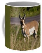 Pronghorn Male Custer State Park Black Hills South Dakota -2 Coffee Mug