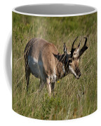 Pronghorn Male Custer State Park Black Hills South Dakota -3 Coffee Mug
