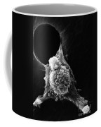 Pseudopodia Sem Coffee Mug by Science Source