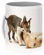 Pup Biting Lab On The Ear Coffee Mug by Mark Taylor
