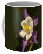 Purple And White Columbine Blossom Facing The Sun - Aquilegia Coffee Mug