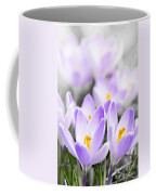Purple Crocus Blossoms Coffee Mug