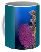 Purple Sea Fan In Raja Ampat, Indonesia Coffee Mug