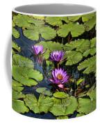 Purple Water Lilies - Nymphaea Capensis  Coffee Mug