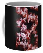 Pygmy Seahorse, Indonesia Coffee Mug