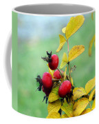 Pyracantha Berries Life Coffee Mug