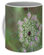 Queen Anne's Lace Flower Partly Open With Dew Coffee Mug