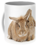 Rabbit And Baby Rabbit Coffee Mug