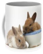 Rabbits And China Bowl Coffee Mug