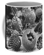 Radiolarians Sem Coffee Mug