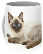 Ragdoll Kitten Coffee Mug