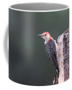 Red-bellied Woodpecker - Looking For Food Coffee Mug