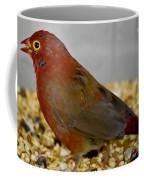 Red Billed Fire Finch Coffee Mug