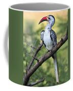Red-billed Hornbill Coffee Mug
