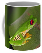 Red-eyed Leaf Frog Coffee Mug by Tony Beck