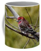 Red Head Black Tail Coffee Mug