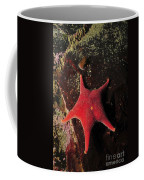 Red Sea Star And Limpet On Brown Rock Coffee Mug